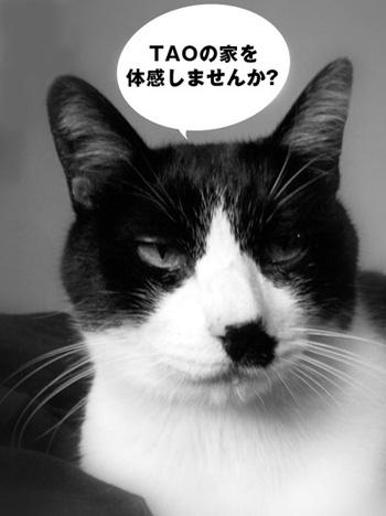 kuro_130909.jpg