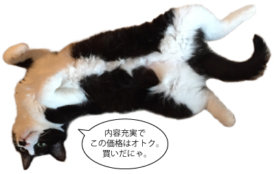 tao_1120_cat.jpg