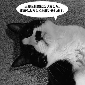 tao_1612_neko.jpg